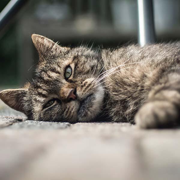 grain free cat foodn
