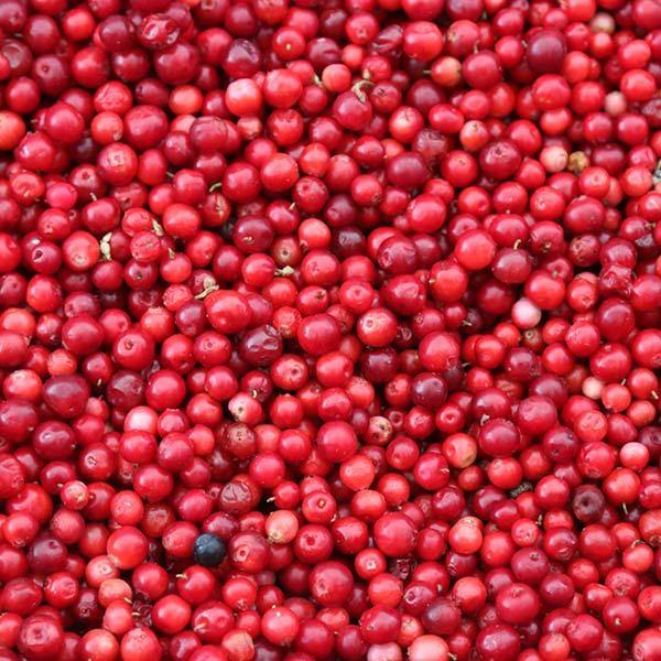 cranberry superfood 65 grain free dog food
