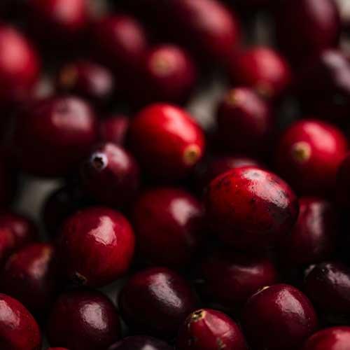 grain-free-adult-dog-food-cranberries