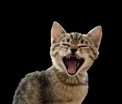 Moorishly-grain-free-cat-food