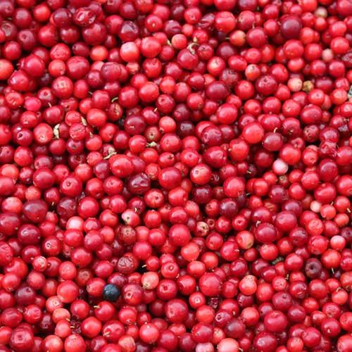 no-grain-dog-food-cranberry