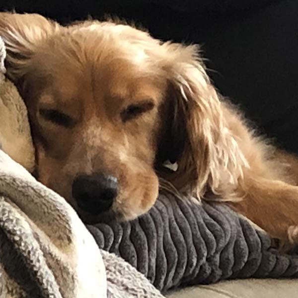 grain free sleeping dog foodn