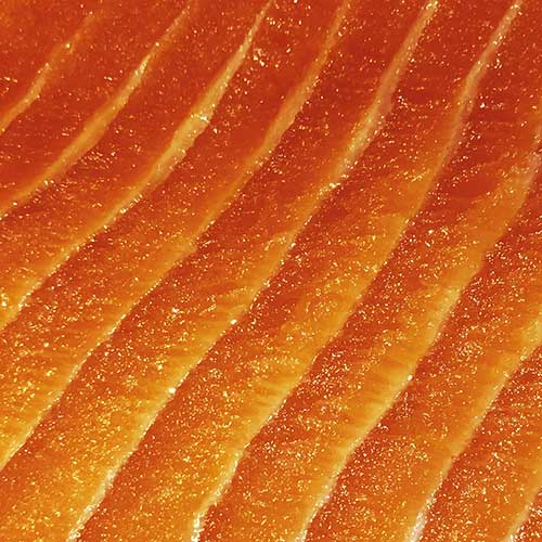 superfood-dog-food-salmon