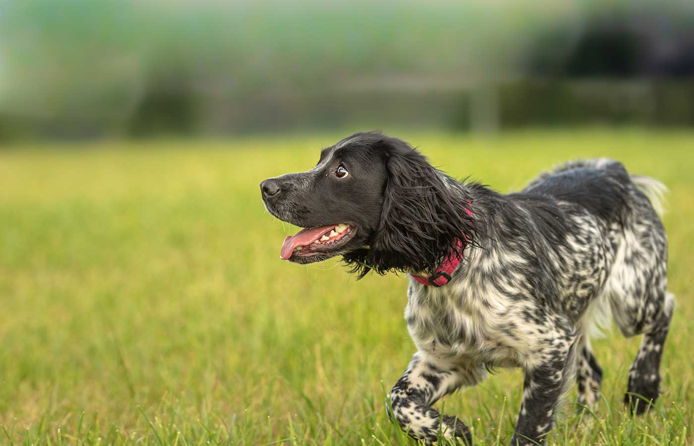 moorishly pet grain free working dog food